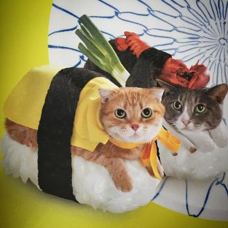 cat-sushi-obviously-i-am-food-touring-after-all-cat-kittycat-pussy-sushi-meow-tastytreats-fluffy-japan-tokyo-jokesiswear_26014890476_o